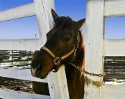HorseII